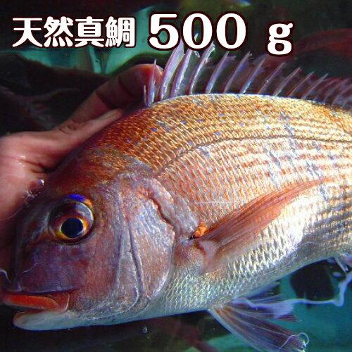 淡路島産天然マダイ500g前後1尾(真鯛・タイ・たい)