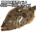 淡路島産天然ヒラメ400g〜500g1枚(活じめ)【お刺身で2〜3人前】(ひらめ・平目)