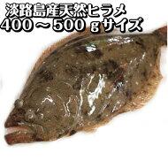 淡路産天然ヒラメ(活〆)400〜500gサイズ1枚【お刺身に!白身の高級魚】