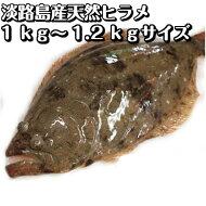 淡路産天然ヒラメ(活〆)1kg〜1.1kgサイズ1枚【お刺身に!白身の高級魚】