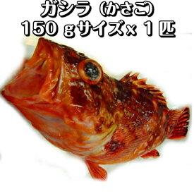 淡路島産がしら(カサゴ・ガシラ)1匹150g前後(氷〆)