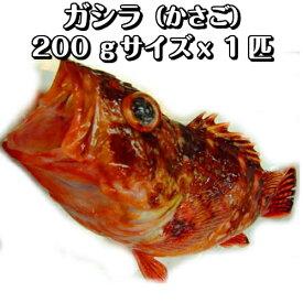 淡路島産がしら(カサゴ・ガシラ)1匹200g前後(氷〆)