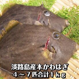 淡路島産天然カワハギ(丸はげ)4〜7枚合計1kg(本かわはぎ)