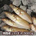 淡路産キス(シロギス)5尾〜8尾で約300g