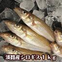 淡路産キス(シロギス)20尾〜30尾で約1kg