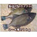 淡路産天然長はげ(ウマズラ)2〜4枚合計1kg(うまづら・うまずら・馬面・ハギ)