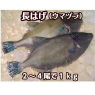 2〜4枚合計1kg