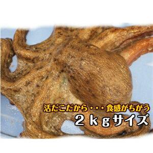淡路産生タコ(マダコ・活〆)2kg前後サイズを1ハイ(生・活じめ・たこ・活だこ・タコ)