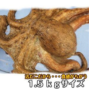 淡路産生タコ(マダコ・活〆)1.5kg前後サイズを1ハイ(生・活じめ・たこ・活だこ・タコ)