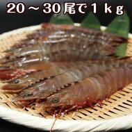 淡路産天然アシアカ海老(生・氷〆)20〜30尾合計約1kg(アシアカエビ)(足赤エビ)