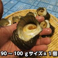 淡路島産天然活さざえ(中)つぼ焼き・お刺身などに1個80〜90gサイズ