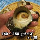 淡路島産天然活さざえ(大)140g〜150gサイズ1個(素もぐり漁獲品/活サザエ/栄螺/活きさざえ)