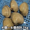 天然活大あさり(大貝)4〜7個で合計約1kg