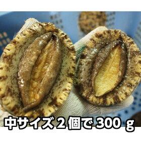 淡路産天然赤あわび(活)中サイズ2個で約300g(赤アワビ・アカアワビ)
