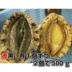 淡路産天然あわび(活)赤と黒セット2個で約500g(アカアワビ・クロアワビ)