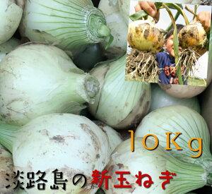 新玉ねぎ 10Kg 淡路島産 淡路島 新たまねぎ 淡路 玉葱 タマネギ