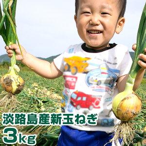 新玉ねぎ 3Kg 兵庫県 淡路島産 新たまねぎ 淡路島 たまねぎ 玉葱 タマネギ 新玉ネギ