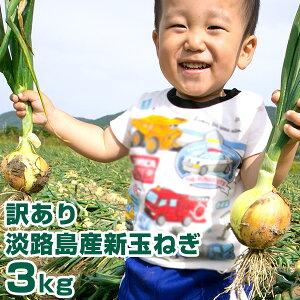 【訳あり】 新玉ねぎ 3Kg 兵庫県 淡路島産 新たまねぎ 淡路島 たまねぎ 玉葱 新タマネギ
