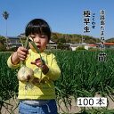 玉葱苗 極早生 淡路島 約100本 家庭菜園 趣味 園芸 食育 濱の宝 貴錦 春いちばん TAさくら T-456 スパート の いずれ…