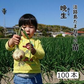 玉葱苗 晩生 淡路島 約100本 もみじ三号 趣味 園芸 食育 やさいの時間