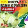 Award from the President mikitani Awaji island Onion 5 kg! Premium onion onion onion ♦ onions, onion, Awaji onions, Awaji island onion and Awaji island onion Awaji island onion