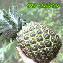 【お盆も平常通り営業中】原種クリームパイン大玉2.5kg(2〜3玉)沖縄でも稀少な幻のパイナップル