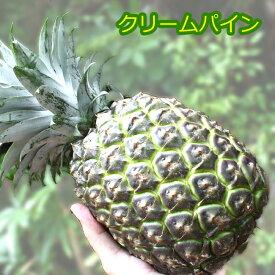 原種クリームパイン大玉2.5kg(2〜3玉)沖縄でも稀少な幻のパイナップル