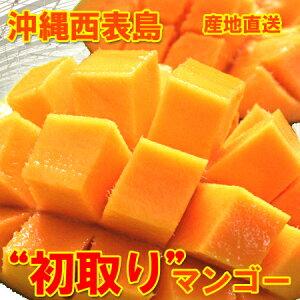 【糖度14度以上保障】西表島先取りマンゴー大玉!2kg(4〜6個)送料無料
