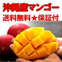 【送料無料】お中元に!沖縄産チャンピオンマンゴー大玉2kg ランキングお取り寄せ