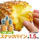 スナックパイン 沖縄産 パイナップル 約1.5kg 送料無料自社管理農園から直送だから安心保証付き沖縄産フルーツ パイナップルの通販はお…