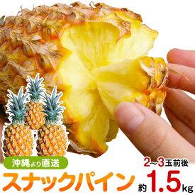 スナックパイン 沖縄産 パイナップル 約1.5kg 送料無料自社管理農園から直送だから安心保証付き沖縄産フルーツ パイナップルの通販はお任せ下さい 母の月 母の日 父の日 ギフト