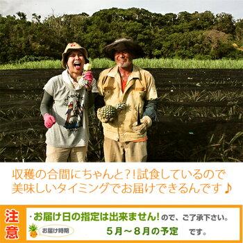沖縄産スナックパイン(パイナップル)沖縄フルーツ(果物)お届け日の指定は出来ません!