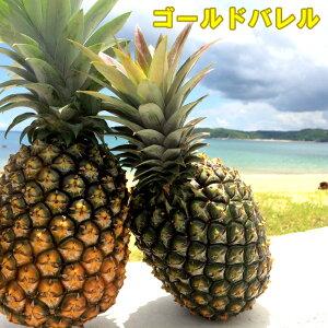絶品パイナップル沖縄産ゴールドバレルお試し1玉 約1kg 送料無料お中元・お供え・お裾わけに