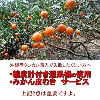 沖縄産たんかん(タンカン)沖縄みかん送料無料