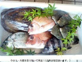 『鮮魚』産直! 何が入っているかお楽しみ(=^・^=)下処理をして発送!