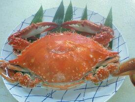 『激安!』淡路島産 活きワタリガニオス 1匹約650g~700g¥5100
