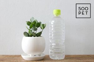 多肉植物/グリーンドラム(三つ足Pot)