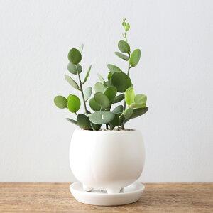 多肉植物/グリーンドラム(三つ足ボールPOT・受皿つき)
