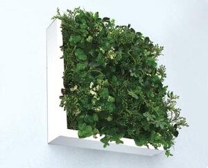 グリーンフレーム 芝生3 グリーンミックス 30センチ ホワイト/額入り 額装込 風景画 絵画 絵 壁掛け アート リビング 玄関 トイレ インテリア かわいい 壁飾り 癒やし プレゼント ギフト アー