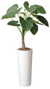 光触媒観葉植物 アートくわず芋1.8〔フロアタイプ(ハイサイズ)〕/光触媒 観葉植物 ウンベラータ フェイクグリーン 花 胡蝶蘭 開店祝い 開業祝い 誕生祝い 造花 アートフレーム おしゃれ 5Lサ
