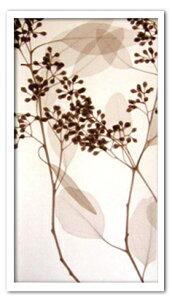 レントゲンアート 絵画 ユーカリ III/インテリア 壁掛け 額入り 額装込 風景画 油絵 ポスター アート アートパネル リビング 玄関 プレゼント モダン アートフレーム おしゃれ 飾る Lサイズ 巣