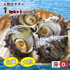 伊勢志摩産 海女漁 厳選 サザエ 天然 活き 1キロ 4~6個 貝 かい カイ 壺焼 さざえ 海の幸 新鮮 産地直送