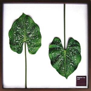 Elephant ear leaf アートフレームジェイアイジー(JIG) IFF10025【送料無料】