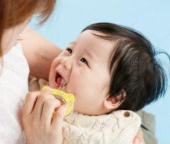 【5ヶ月〜3歳頃】【歯ぶらし/歯みがき】【全12種類】ベビーハブラシ12Animals*HAMICO(ハミコ)*
