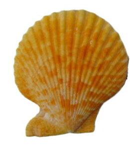 南の島の2枚貝ヒオウギ貝L(1個)オレンジ系【バリ・アジアン雑貨バリパラダイス】