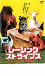 レーシングストライプス【洋画 中古 DVD】メール便可 レンタル落ち
