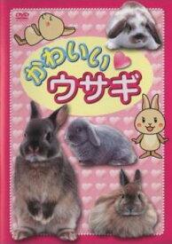かわいい ウサギ【趣味、実用 中古 DVD】メール便可 ケース無:: レンタル落ち