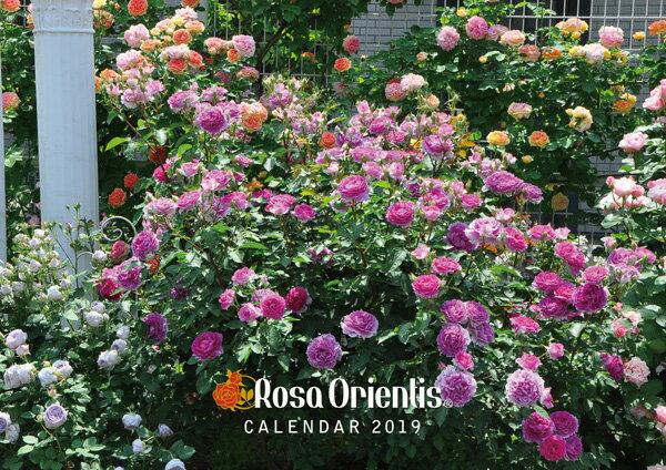 オリジナルカレンダー2019 ロサオリエンティス ★クロネコDM便にて送料無料