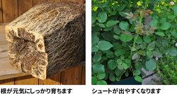 プレミアローズセレクション根を育てる肥料1kg※土セットと同梱可※(1個まで)ZIK-10000