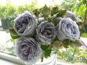 バラ苗【新苗】ターンブルー (FL青紫) 国産苗《KAI》